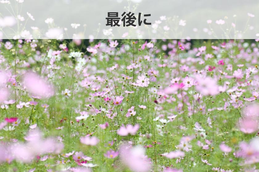 アフィリエイトで使う画像GIF・JPEG・PNG 3種類の画像形式について